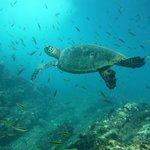 Carrillo Adventures Tour Kayaking & snorkeling Isla Chora Samara Guanacaste Costa Rica