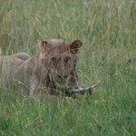 On the Mara