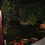 Koi Fish pond at The Ayurvedic Spa
