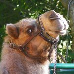 What day is it ? Hump Day !!!