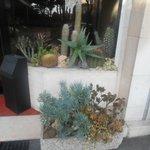 Une collection de cactées décore la  vitrine d'entrée