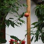 Garden/Hummingbird