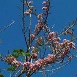Blühender Baum vor dem Fenster