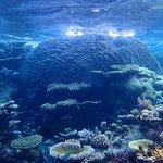 Kaashidhoo reef (south of Park Hyatt)