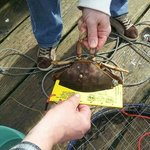 We've never been crabbing. Jeff taught us everything we needed to know! So much family fun!
