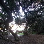 Gorgeous milkwood forest