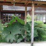 Las Nalcas gigantes a la entrada de la casa...