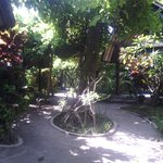 this our garden look like...