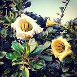 Beautiful Flora/Fauna