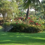 Beautiful flowers in garden