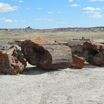 Petrified Wood along the trail at the Visitor's Center