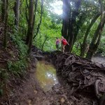 a muddy, muddy trail... safer to wade through than risk the roots