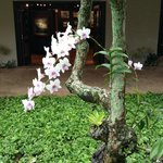 Orchid plant in main gardens
