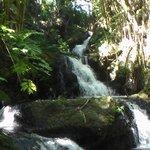 Falls at the Gardens