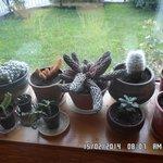 sos plantas x ejemplo
