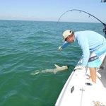 Sharks in the Gulf Streem