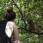 Koala off our balcony