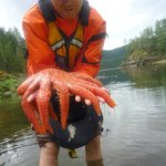Footprint Show and Tell Kayak Tours