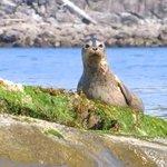 Footprint Wildlife Kayak Tours