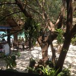 View of the restaurant from our bungalow
