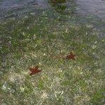 Bewuchs Lagune