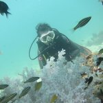 diving with OceanPro Divers