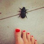 En liten bille på verandaen