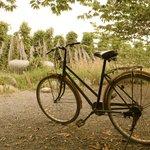 You can borrow a bike