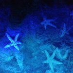 illuminated starfish