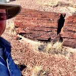 Terry Hunefeld checks out a petrified tree in the Petrified Forest