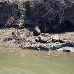 One of many crocodiles we saw!