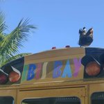 Free shuttle to downtown Key West aboard the Ibis Bay Beach Resort short school bus!