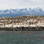 Colonie d'oiseaux sur un îlot