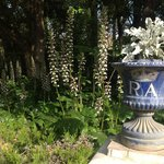Garden urn with acanthus flowers behind. RA = Real Alcázar