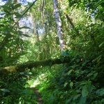 La Amistad forest