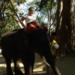 a great day with elephants!