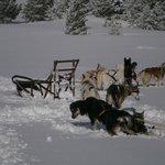 traineau à chiens aux aigrelles