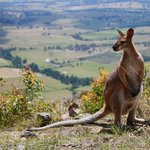 Roo with view