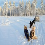 Huskies waiting to get running