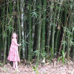 by the bamboo in the grounds between resort & river