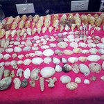 These are all the shells we found just at captiva.  after a storm and some big pieces of coral