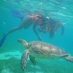 very close to turtle