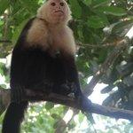 monkeys!!