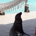Typical sunbathing sea lion joining us outside