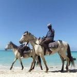 Tu peux prendre une ride de cheval sur la plage