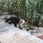 our closet monkey friend