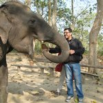 Feed the elephants after the safari