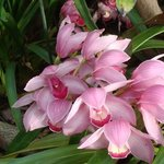 Orchid Garden, Porto Mare, Funchal, Madeira