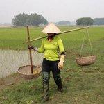Rice field in front of Moon Garden