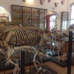 Fragonard museum